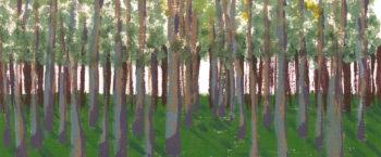 Birch Grove crop 3 (c) Jennifer Mosher
