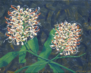 Ginger Lilies - acrylic on stretched canvas (c) Jennifer Mosher