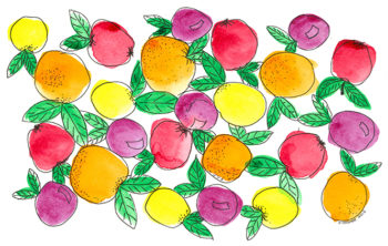 Oranges and Lemons - watercolour and ink (c) Jennifer Mosher