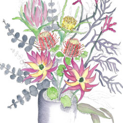 Proteas 2 - watercolour and ink (c) Jennifer Mosher