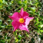 Trinket Flower inspiration