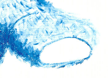 Blue Bear - crop 3 (c) Jennifer Mosher