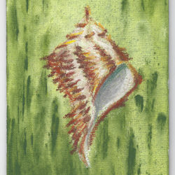 Sea Shell - oil pastel on canvas board (c) Jennifer Mosher