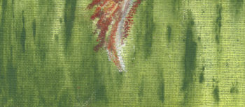 Sea Shell - crop 1