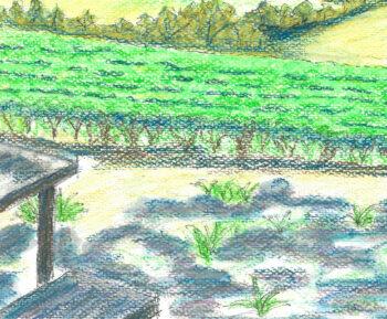 Megalong Valley from Dry Ridge Estate - crop 3 (c) Jennifer Mosher